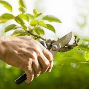 Pruning & Trimming Tools